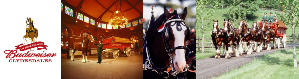 Clydesdales at the Texas Rice Festival